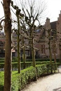 Garten mit Spalierbäumen Brügge
