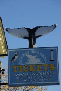 Whale Watching West Street