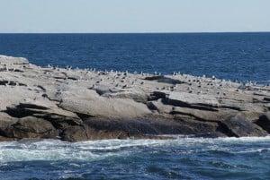 Möwenkolonie Whale Watching