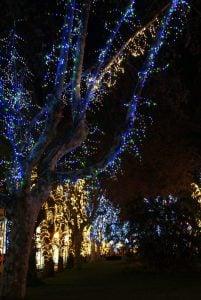 Baum an Weihnachten Funchal Madeira