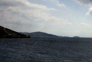 Muschelzucht Kroatien Split Meer