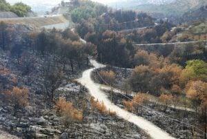 Waldbrand Kroatien Waldweg Berge