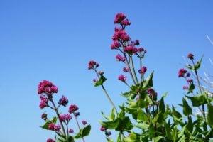 Titanic Memorial Garden Blumen