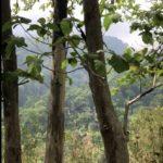 Obstbäume auf 1000 Meter Höhe